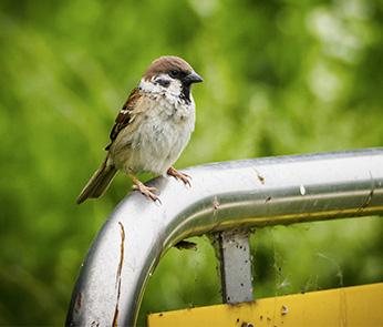 Naturschutz_LINKS_fauna