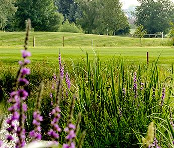 Naturschutz_LINKS_flora